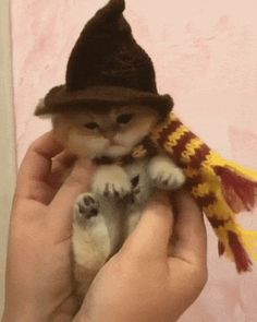 Gryffindor Kitty... I ❤ tiny furbabies and I ❤ Harry Potter so how can this get any better!!!