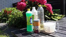 Ti tips til vakre roser Red Bull, Garden Inspiration, Garden Plants, Planting Flowers, Diy And Crafts, Water Bottle, Tips, Green, Gardening
