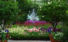 Visit NYCgo for official NYC information on events and activities, like museums, gardens, Broadway shows and entertainment, restaurants and shopping. Brooklyn, Flower Show, New York, Botanical Gardens, Bulb, Flowers, Plants, New York City, Onions