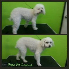 #doglovers #dogclean #dogstore #dogboutique #dogcare #pet #petgrooming #petlovers #petcare #petsupplies #1doggroomer #losangeles #dtla #westla #usc #westHollywood #hollywood #Venicebeach #dogbeach #dogspa #dognailtrim #dogwash #petwash #deslyspetgrooming #deslys #deslyspg #fluffy #pooch #poochie #thebestofLA #orijendogfood #orijen #pulsar #cat #catlover #catcare #animallovers #animal #animalcare #instagram