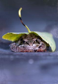 """Leaf me alone, I just woke up"" Frog Under A Leaf / Magical Nature Tour ~ Animals & Nature"