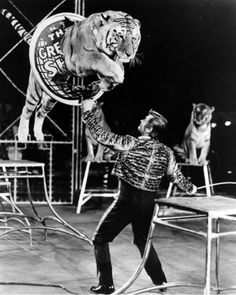 Vintage Circus | Charly Baumann, Animal Trainer | Ringling Brothers and Barnum & Bailey Circus (1970)