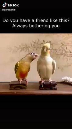 Funny Animal Jokes, Funny Animal Pictures, Cute Funny Animals, Animal Memes, Funny Dogs, Cute Dogs, Funny Birds, Cute Birds, Parrot Pet