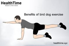 The classic core and spine stabilization exercise, bird dog, has many benefits. Here's a glimpse of the advantages and variations in bird dogs exercise. Bird Dog Exercise, Exercise Benefits, Core Exercises, Low Back Pain, Abdominal Muscles, At Home Workouts, Abs, Vibrant, Health