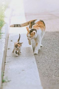 Momma walking with her baby