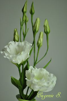 {Perfect white Lisianthus by EugenieS}