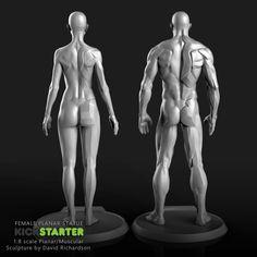 Anatomy Drawing Female The Female Planar Statue by David Richardson — Kickstarter Anatomy Sketches, Anatomy Drawing, Anatomy Art, Muscle Anatomy, Body Anatomy, Human Anatomy, Art Reference Poses, Anatomy Reference, Female Reference