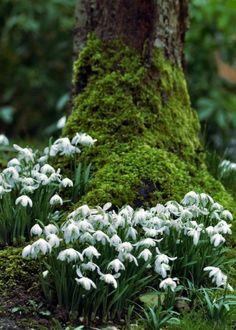My Garden Journal: Nothing. My Garden Journal: Nothing. White Flowers, Beautiful Flowers, Landscape Maintenance, Garden Journal, Woodland Garden, Woodland Flowers, White Gardens, Spring Is Here, My Secret Garden