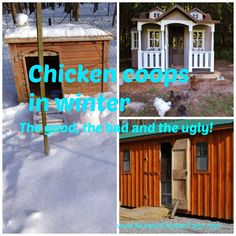 Winter Chicken Coops: The Good, Bad And Ugly