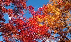 Colors in Nikko