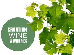 These 25 wineries in Croatia are waiting to serve you Croatian wine.