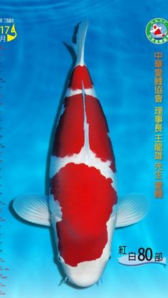 Koi Fish Pond, Koi Carp, Diy Pond, Kohaku, Japanese Koi, Ponds, Goldfish, Animals And Pets, Bedding