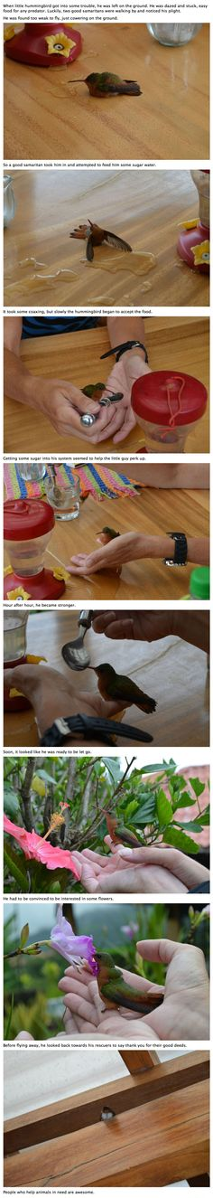 A troubled hummingbird helped out by two good samaritans
