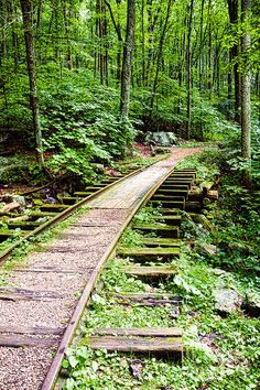 Abandoned Blue Ridge Track is a photograph by Sherry Curry. Old abandoned railroad track in the woods on the Blue Ridge Parkway, Virginia, USA. Source fineartamerica.com
