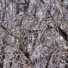 Ice ice and more ice. At least the power stayed on. More snow on the way. A North Carolina snow/ice storm