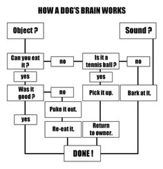 Dogs' simple minds