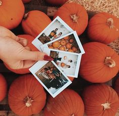 pumpkin, autumn, and fall image Best Pins ? Casa Halloween, Halloween 2019, Autumn Photography, Photography Ideas, Photography Lighting, Fashion Photography, Photography Hashtags, Photography Backgrounds, Photography Challenge