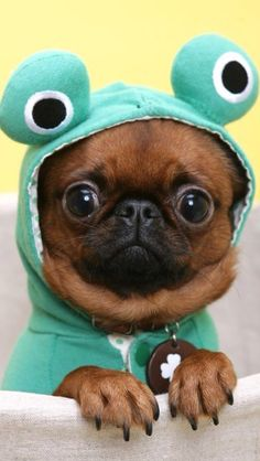 This is pug is soooo cute!!!!