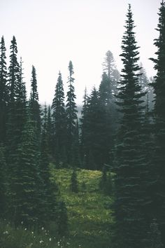 the great outdoors🌲 Paradis Sombre, Beautiful World, Beautiful Places, Ex Machina, Nature Aesthetic, Pine Forest, Mount Rainier, The Great Outdoors, Wonders Of The World