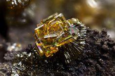 group of tabular yellow-brown crystals of cyrilovite up to mm Photo Matteo Chinellato Collection Domenico Preite Copyright © Matteo Chinellato