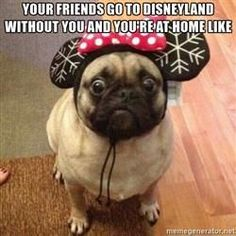 cdn.meme.am cache instances folder57 250x250 72253057 disney-pug-your-friends-go-to-disneyland-without-you-and-youre-at-home-like.jpg
