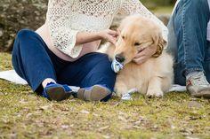 ensaio gestante com cachorro curitiba