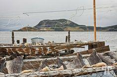 Drying salted cod - Trinity, Newfoundland - Canada