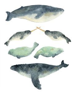 Whale Sandwich Print by CactusClub on Etsy