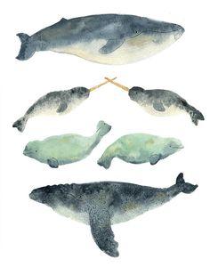Whale Sandwich Print by MelindaBoyce on Etsy, $20.00