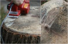 You guys, we made a table from a slice of tree stump, no joke! We mentioned tackling a DIY project we were pretty excited about weekend . Wood Stumps, Wood Logs, Wood Slab, Tree Stumps, Tree Stump Side Table, Tree Trunk Table, Tree Stump Furniture, Rustic Furniture, Resin Table