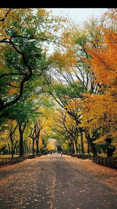 Central Park.NYC.