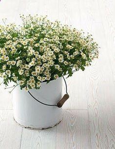 simple flowers...
