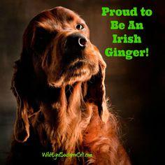 Proud to be an IRISH GINGER!  WildEyedSouthernCelt.com