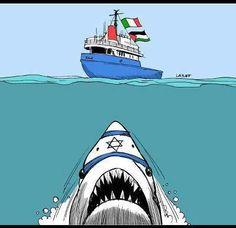 Israel shark