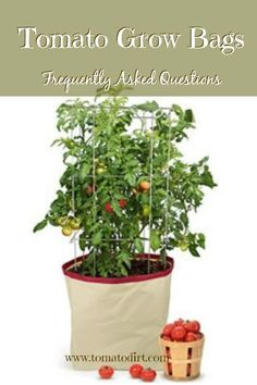 Grow Organic Tomatoes Tomato Grow Bags: frequently asked questions about these new and unique containers for growing tomatoes with Tomato Dirt. Container Vegetables, Planting Vegetables, Growing Vegetables, Container Gardening, Gardening Tips, Urban Gardening, Organic Gardening, Sustainable Gardening, Texas Gardening