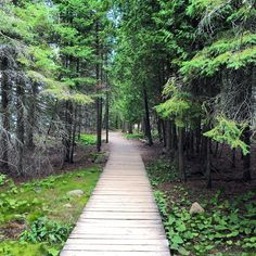 This Boardwalk Trail Takes You Through An Ancient Forest In Ontario - Narcity Places To Travel, Places To See, Tobermory Ontario, Ornamental Horticulture, Ontario Place, Ontario Travel, Canadian Travel, Bicycle Maintenance, Hiking Trails