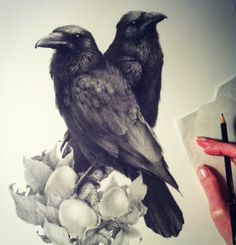 Wonderful Birds Drawings by British Artist Vanessa Foley