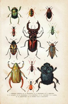 Scientific Illustration | thinkingdifferent: Terrific vintage chromolithographs!