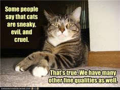 Some people say that cats are sneaky, evil and cruel.  That's true.  We have many other fine qualities as well.