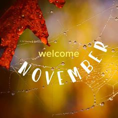 Join all of us at @no & Xenotel Group Hotels in welcoming November! Even though weather has cooled the city is still ripe for exploring & enjoying. Greece has another kind of beauty to offer during the colder months so go out keep warm and explore the beautiful greek winter scene!  #winteradventures #welcomenivember #hellonovember #byeoctober #weloveautumn #welovewinter #awesomemonth #newmonthnewstart #feelinghopeful #november2016 #autumnisawesome #winterisgreat #instagood #instamood…