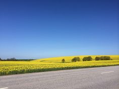 Skåne Sweden..in May..I am visiting there someday soon