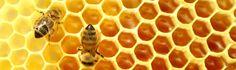 Uitsterven bijen voorspelt hongersnood voor de mens Bijen van commerciële bijenkorven bestuiven meer dan een derde van de Amerikaanse gewassen. Dit web van voedsel omvat alles, van vruchten zoals perziken, appels, kersen, aardbeien en meer, zoals noten, Californische amandelen enz enz. De bestuiving van deze gewassen vindt voor 90% plaats door honingbijen. Om nog maar niet te spreken van het enorme aantal bloemensoorten die zij ook bevruchten.   Bron: InfoWars.com