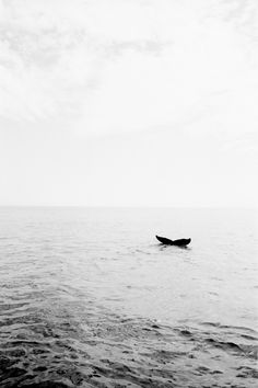 """& is another world, but it is in this one. Yeats """"There is another world, but it is in this one. A Well Traveled Woman, Wale, Pics Art, Marine Life, Under The Sea, Black And White Photography, Beautiful Creatures, Outlander, Art Photography"""