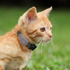 GPS Pet Tracker Collar