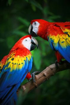 Extremely Fascinating Scarlet Macaw Facts You Ought to Know - Bird Eden National Geographic Animals, National Geographic Photography, Wildlife Photography, Animal Photography, Most Beautiful Birds, Animals Beautiful, Funny Animals, Cute Animals, Foto Real