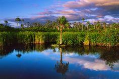 Big Cypress National Preserve (U. Florida City, Visit Florida, Florida Living, Moving To Florida, Florida Travel, Everglades National Park, Florida Everglades, Us National Parks, Park Service