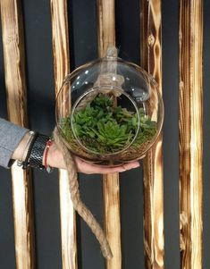 Άνθος Plant Hanger, Cactus, Succulents, Plants, Home Decor, Decoration Home, Room Decor, Succulent Plants, Plant