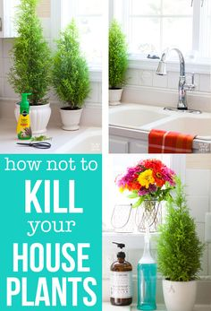 House plant care for the forgetful aka How Not to Kill your Houseplants | In My Own Style