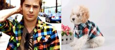 Plaid flannel shirt: Zac Efron VS. This dog | Who Wore It Better: 25 Dogs VS. Celebrities
