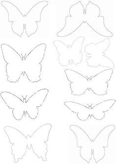 papillons                                                                                                                                                                                 Plus